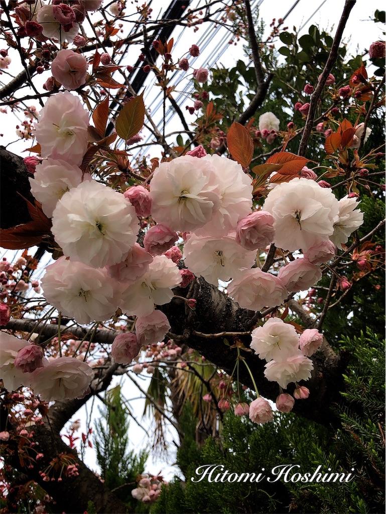 f:id:hitomihoshimi:20190415092438j:image