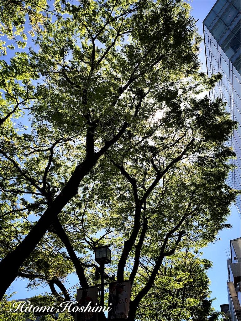f:id:hitomihoshimi:20190502084300j:image