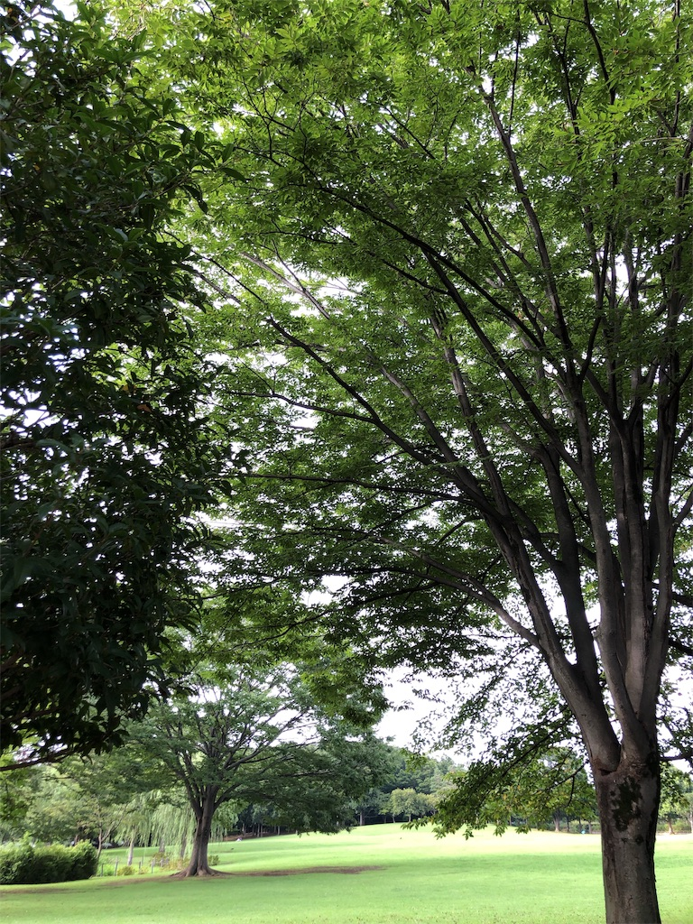 f:id:hitomihoshimi:20190826232607j:image