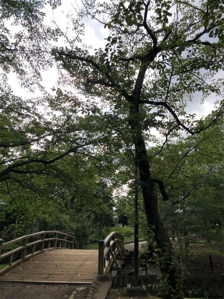 f:id:hitomihoshimi:20190826232625j:image