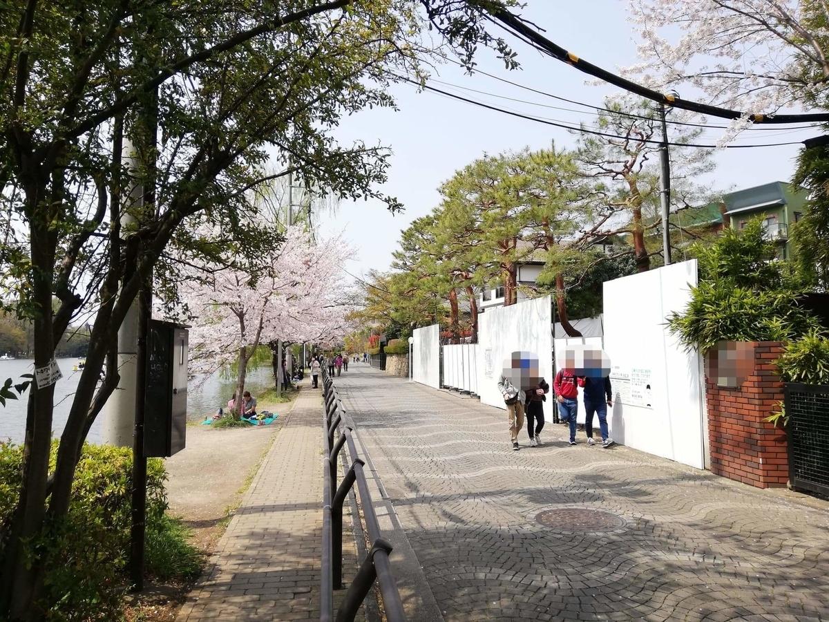 石神井池の外周に咲く桜の写真