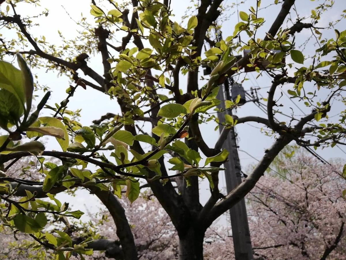 石神井池の外周にある樹木の写真