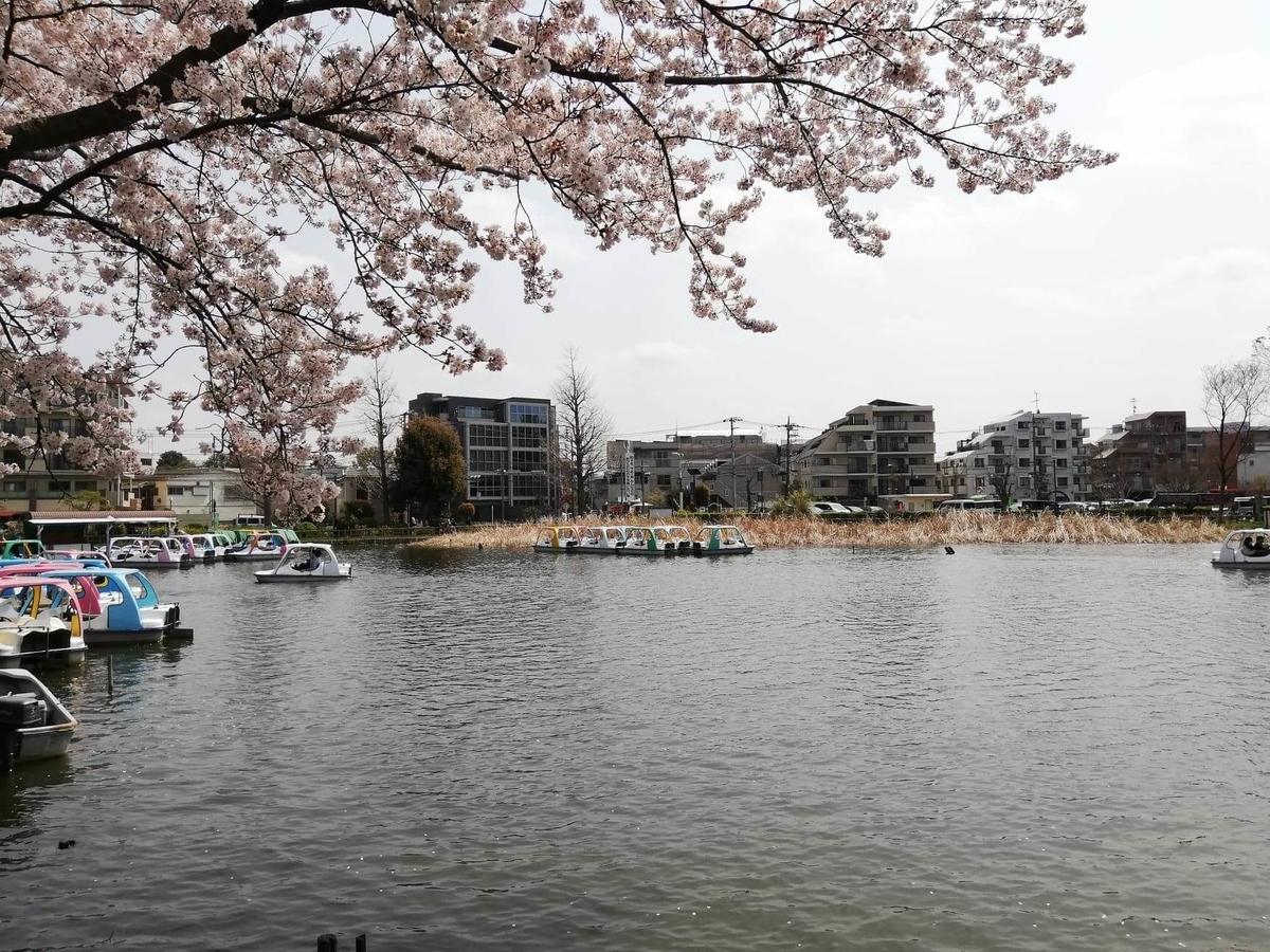 『石神井公園』にある石神井池の写真