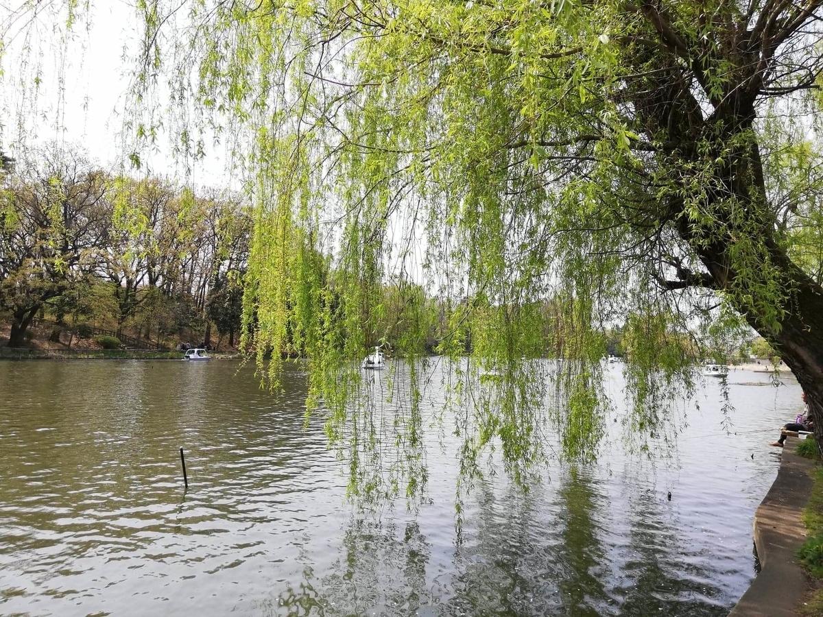 『石神井公園』の石神井池沿いにある柳の写真