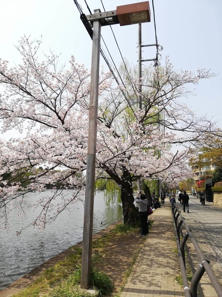 『石神井公園』の石神井池沿いにある電柱の写真