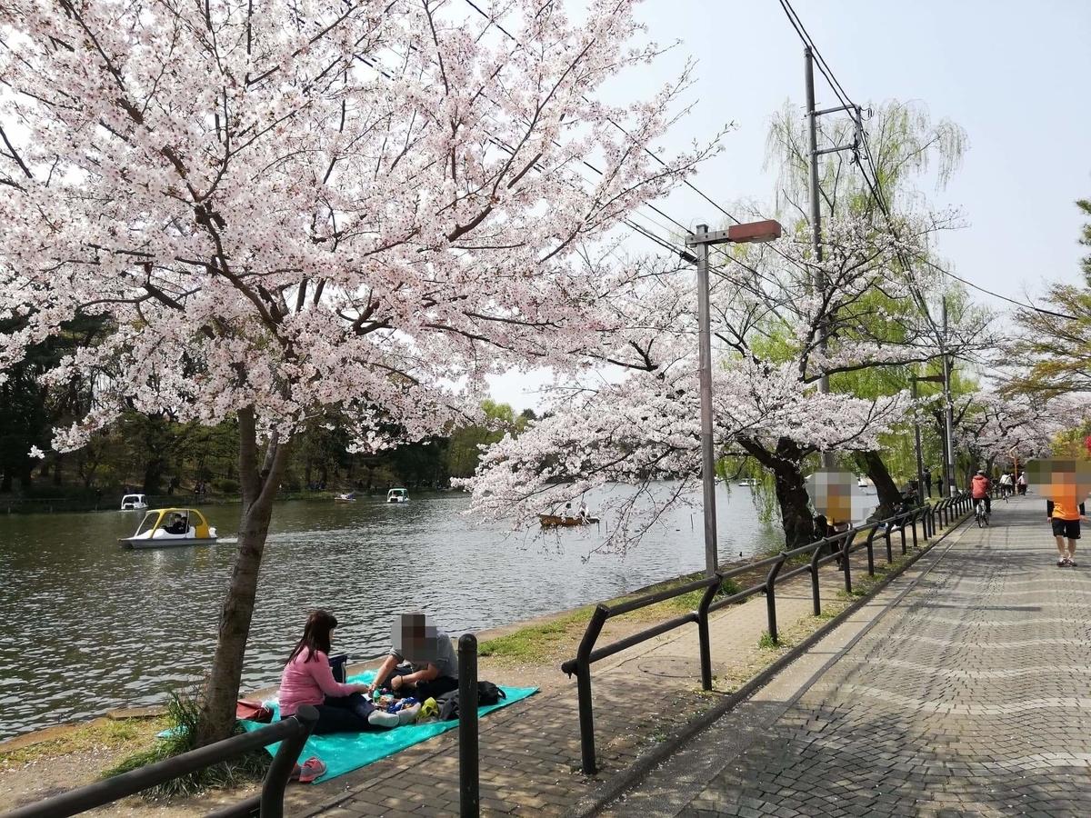 『石神井公園』の石神井池沿いにある桜の写真
