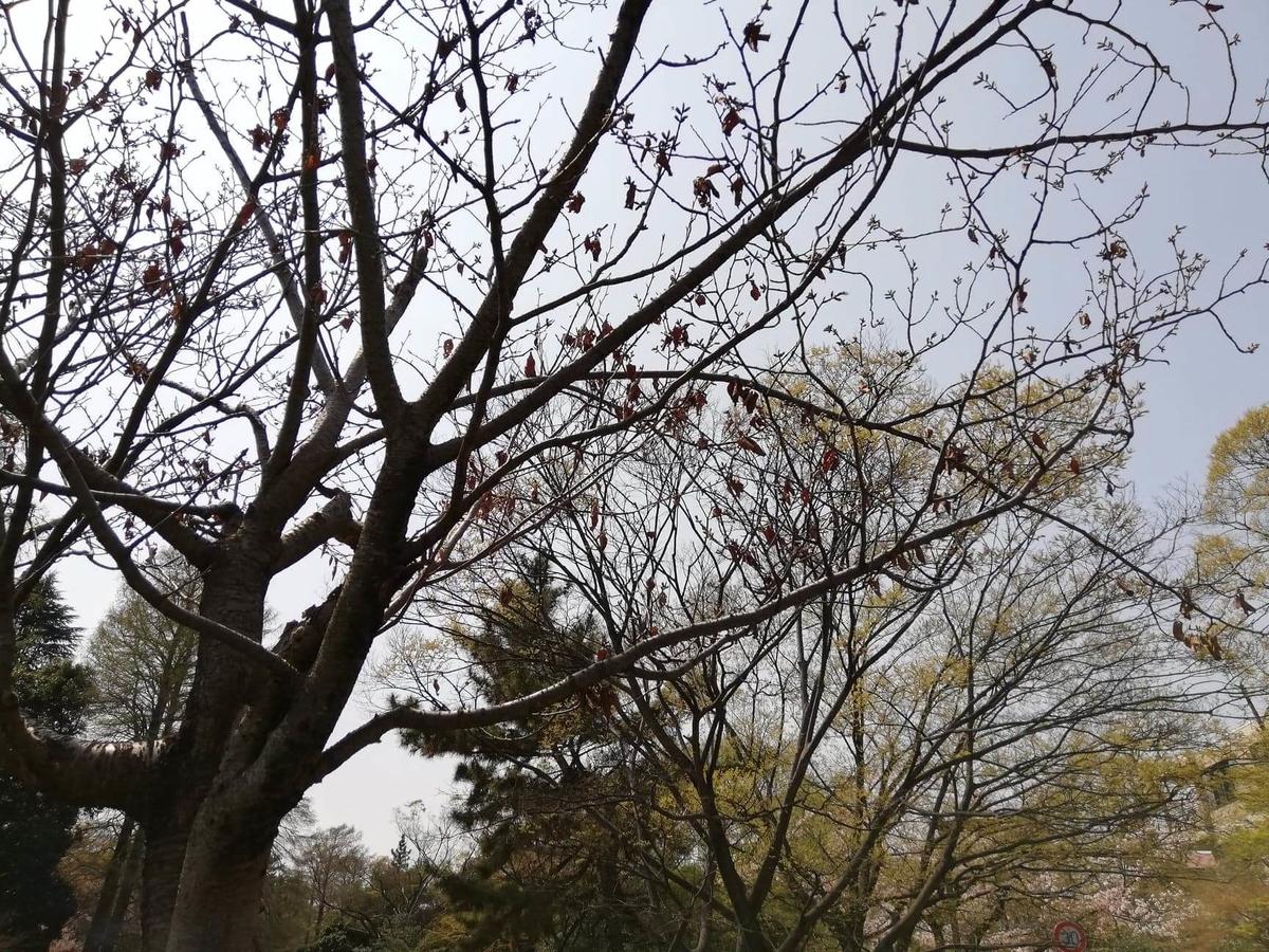 『石神井公園』の石神井池沿いにある枯れ木の写真