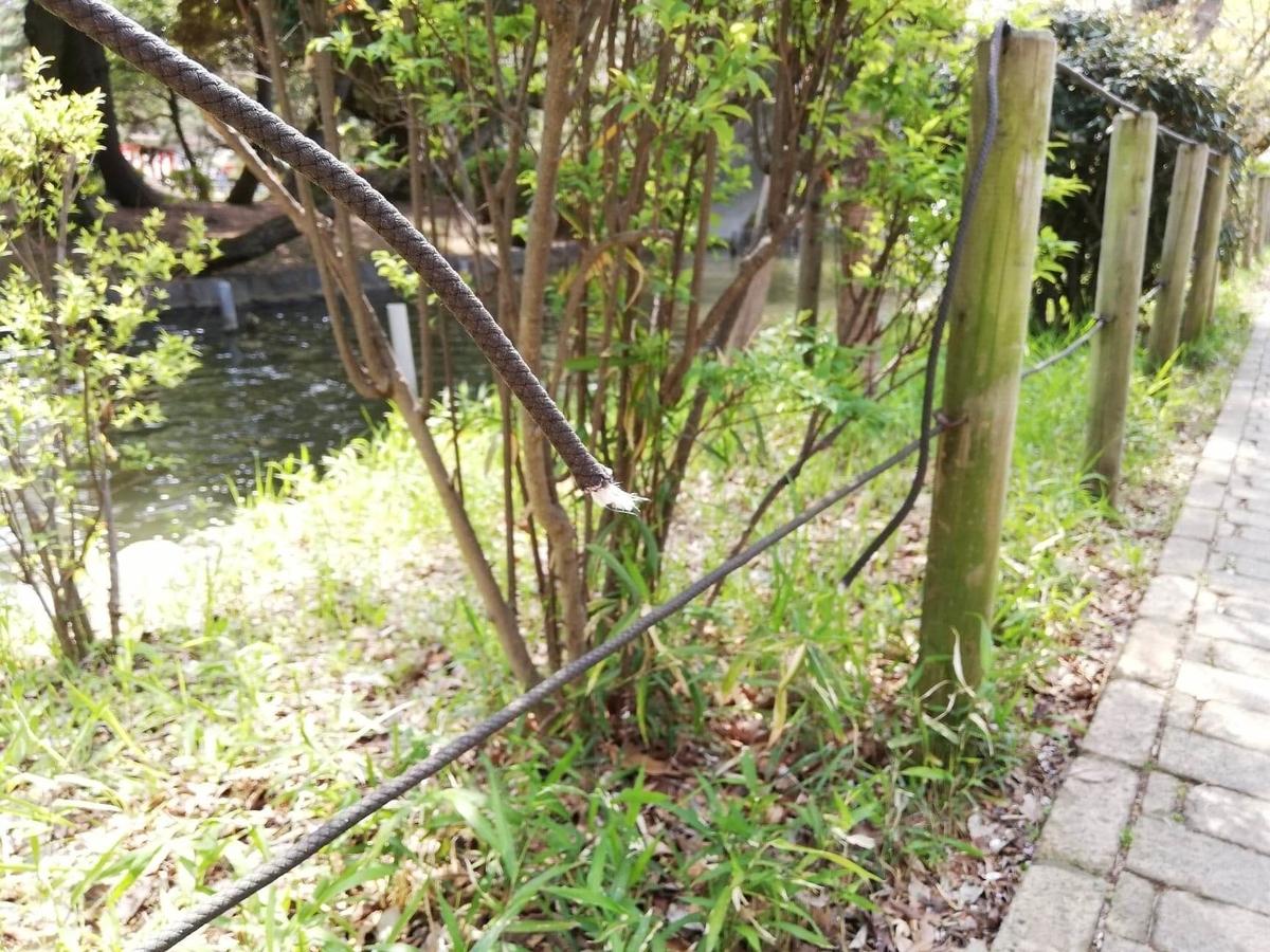 『石神井公園』の石神井池沿いにあるちぎれたロープの写真