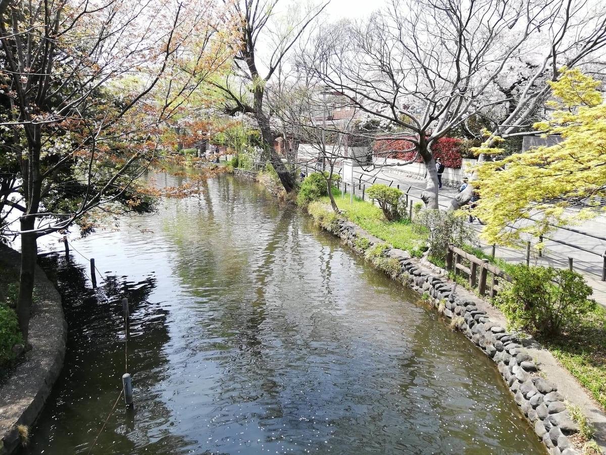 『石神井公園』の中にある橋からの風景写真