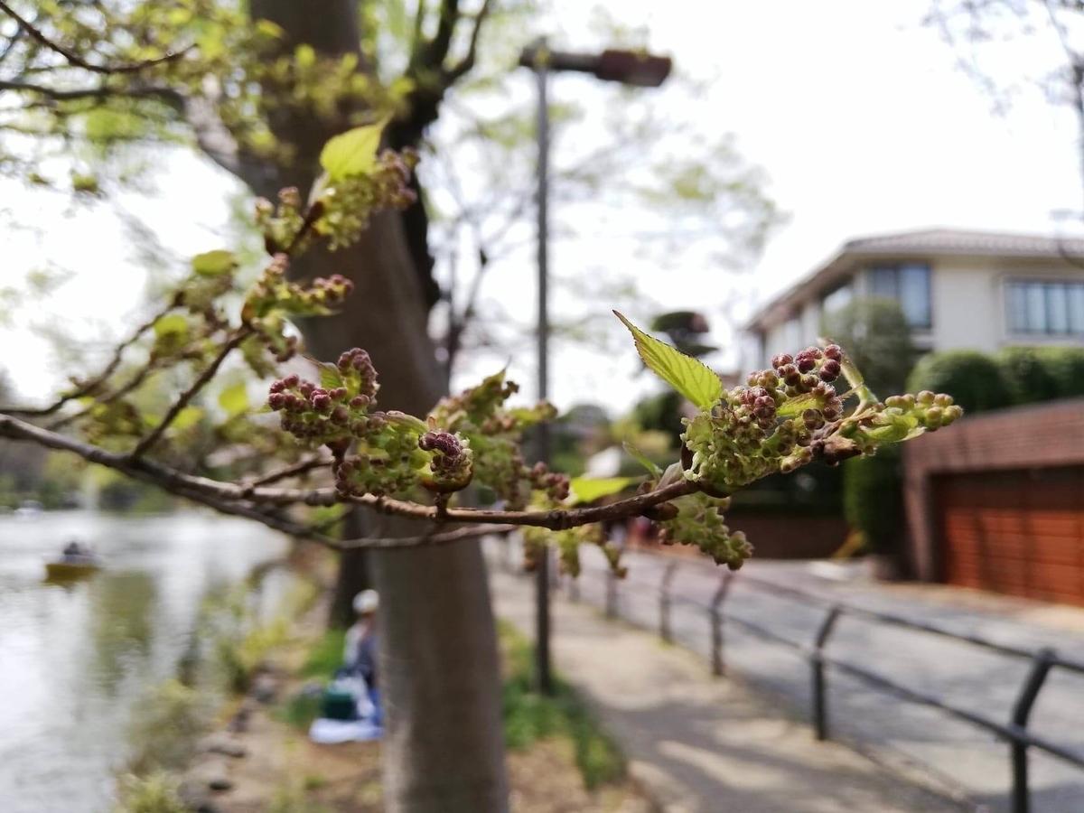 『石神井公園』の石神井池沿いにある実の写真