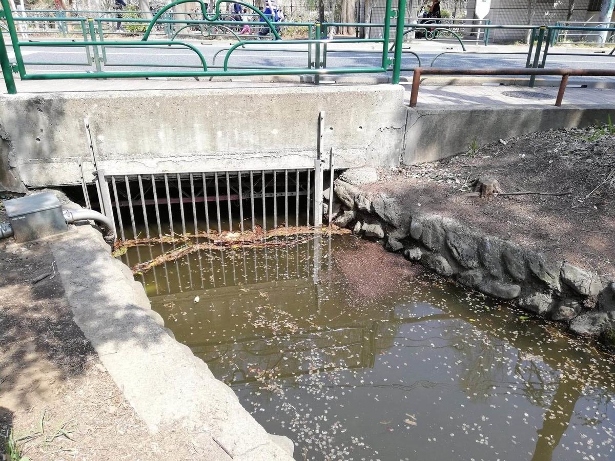 『石神井公園』の三宝寺池近くの排水溝写真