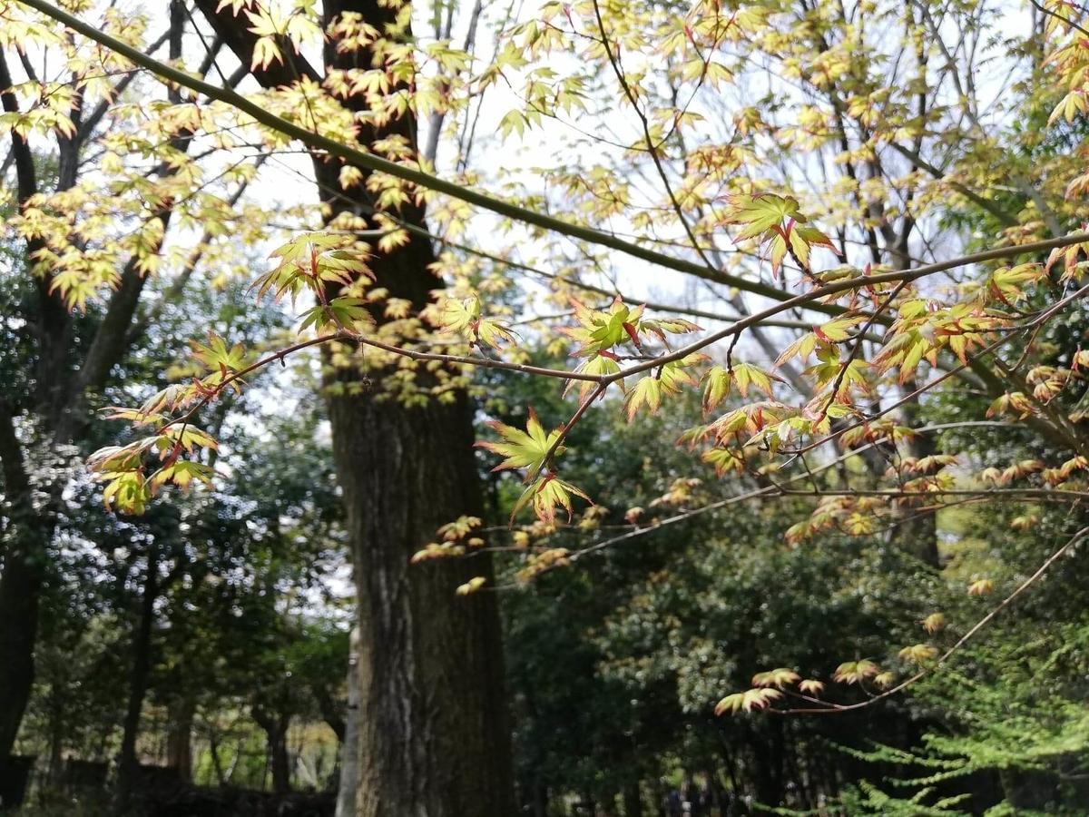 『石神井公園』の三宝寺池沿いにある樹木の写真