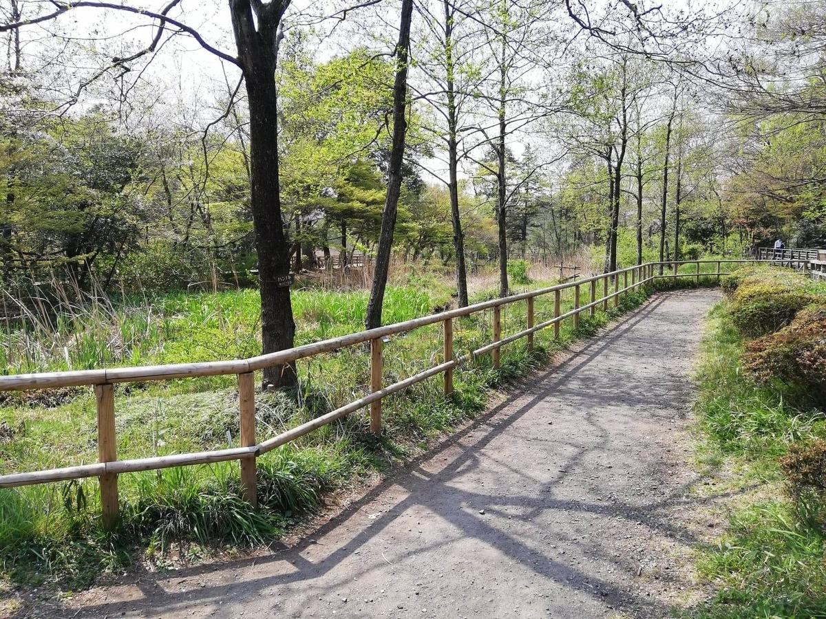 『石神井公園』の三宝寺池沿いにある歩道の写真