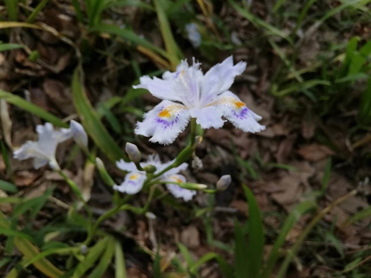 『石神井公園』の三宝寺池沿いに咲いてる花の写真