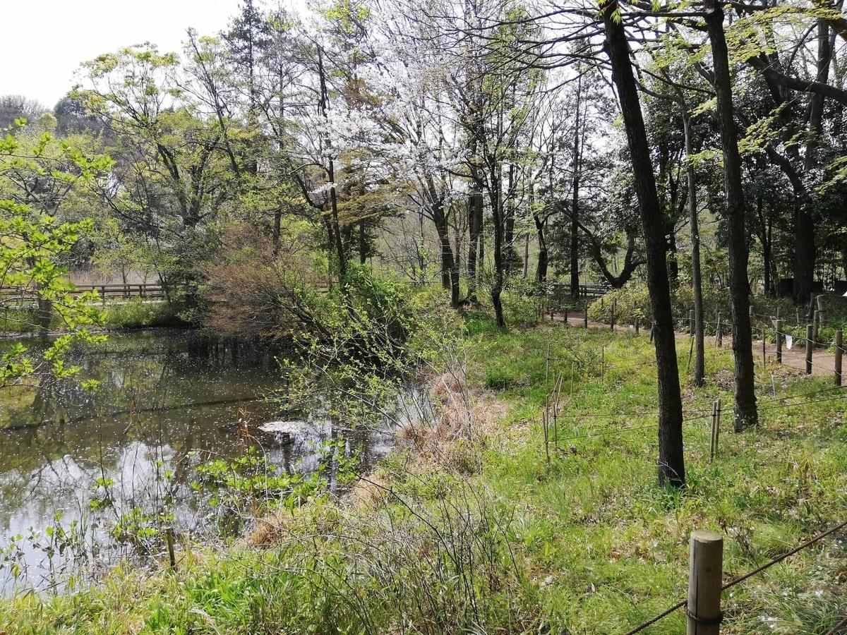 『石神井公園』の三宝寺池沿いの園内写真