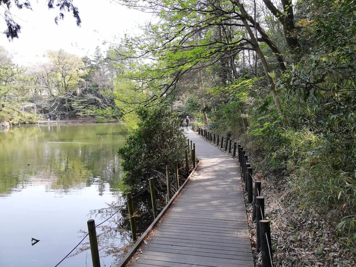 『石神井公園』の三宝寺池外周の写真