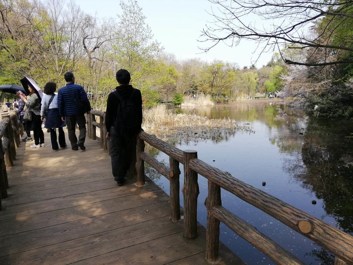 『石神井公園』の三宝寺池にかかる橋の写真