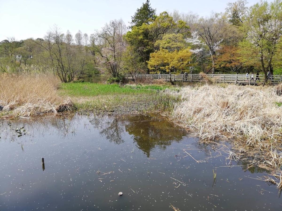『石神井公園』の三宝寺池の写真