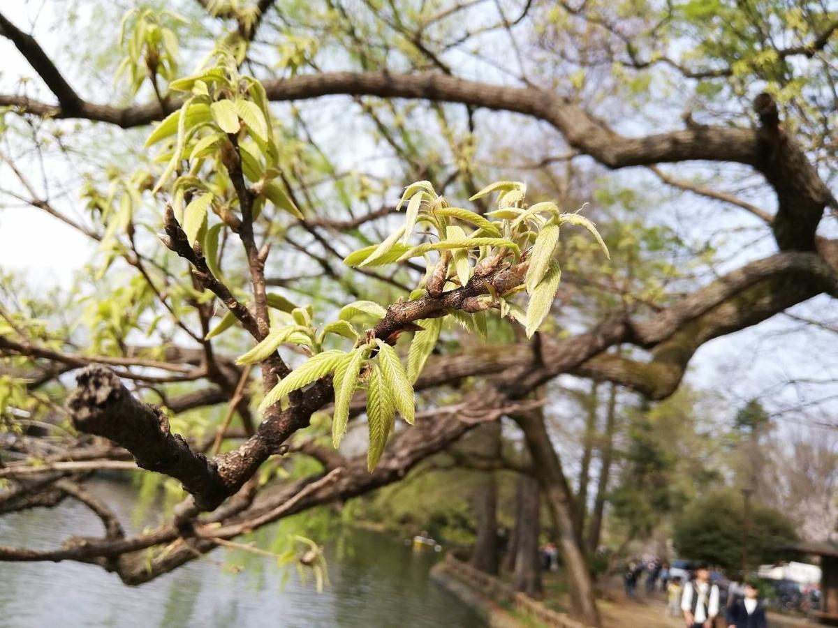 『石神井公園』の石神井池沿いにある樹木の写真