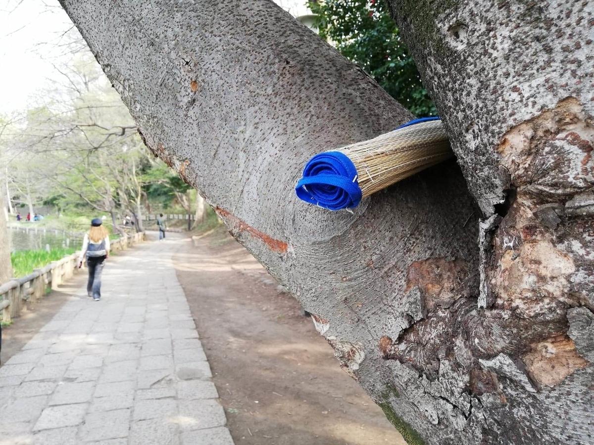 『石神井公園』の石神井池沿いにある樹木に引っかかっている敷物の写真