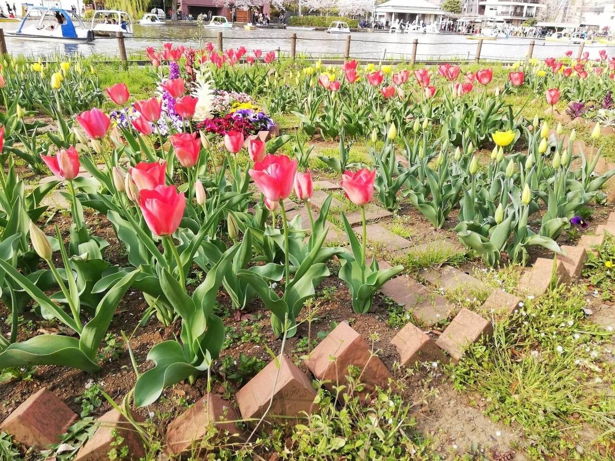 『石神井公園』にあるチューリップ畑の写真