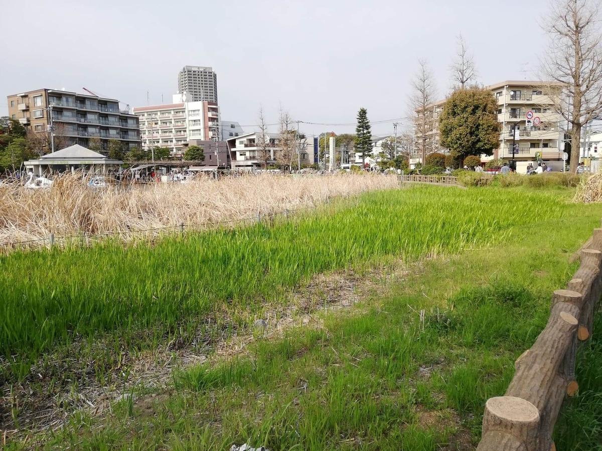 『石神井公園』の園内写真