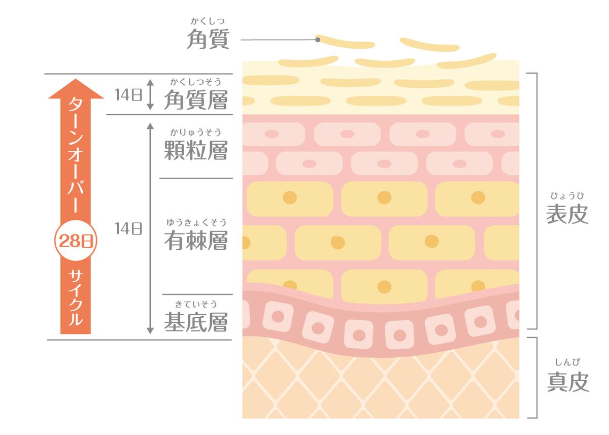 肌のターンオーバーのイメージ画像