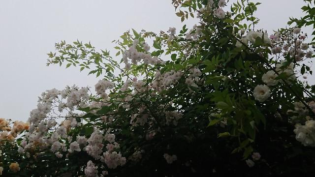 f:id:hitorinekotabi:20180612154946j:image