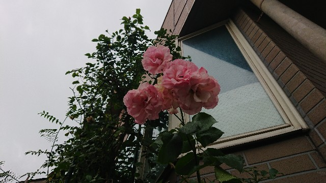 f:id:hitorinekotabi:20180629045434j:image