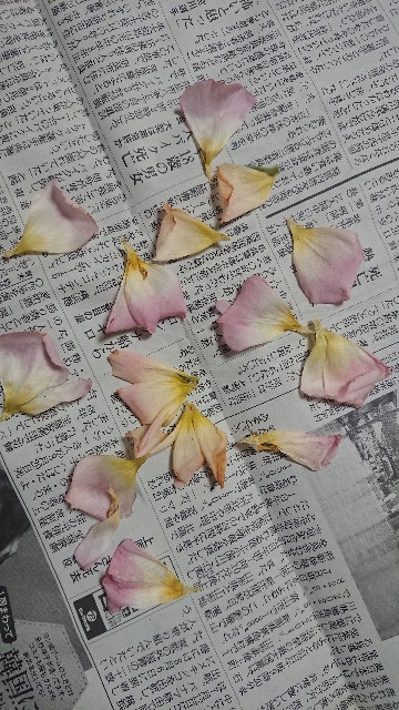 f:id:hitorinekotabi:20180920084601j:image