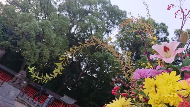 f:id:hitorinekotabi:20181020062601j:image