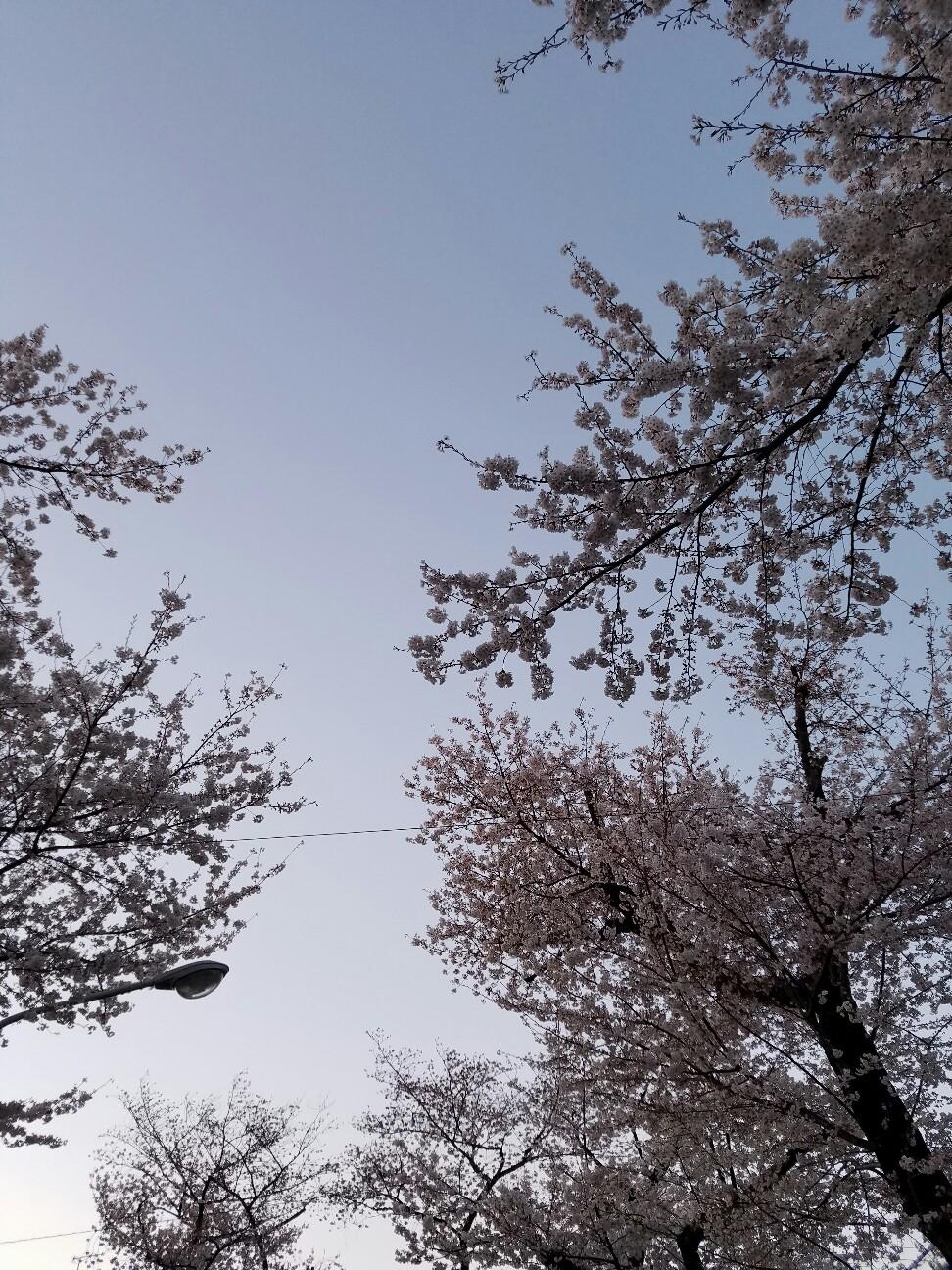 f:id:hitotobi:20190406105523j:image