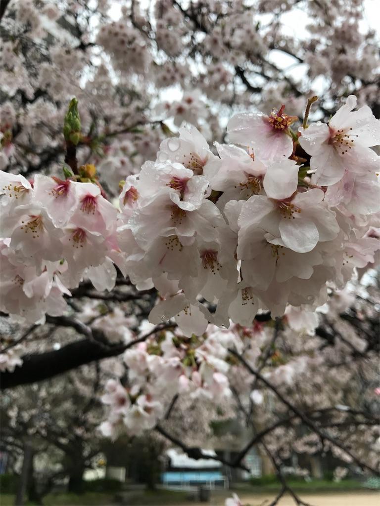 f:id:hitotokiblog:20170409230825j:image