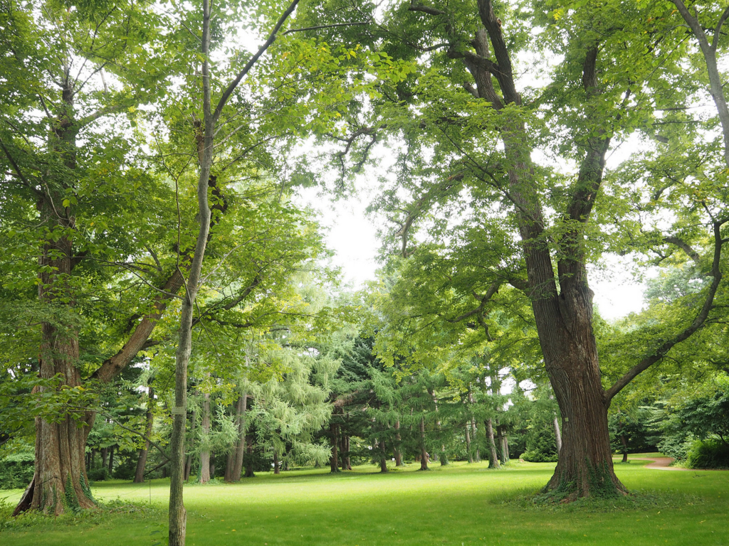 北海道大学植物園の木