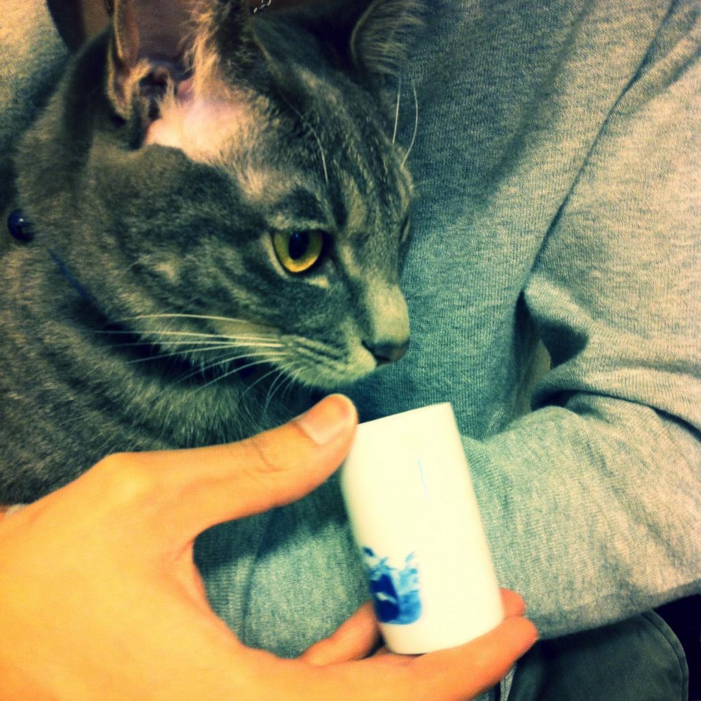 聞香する猫