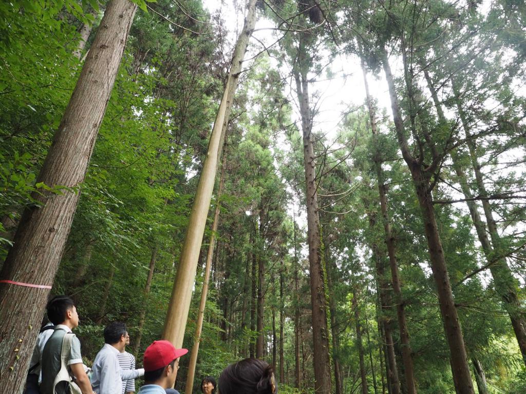 皮むき間伐が行われている木を見学