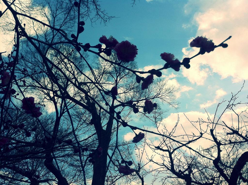 誰かの庭の美しさは誰のものか