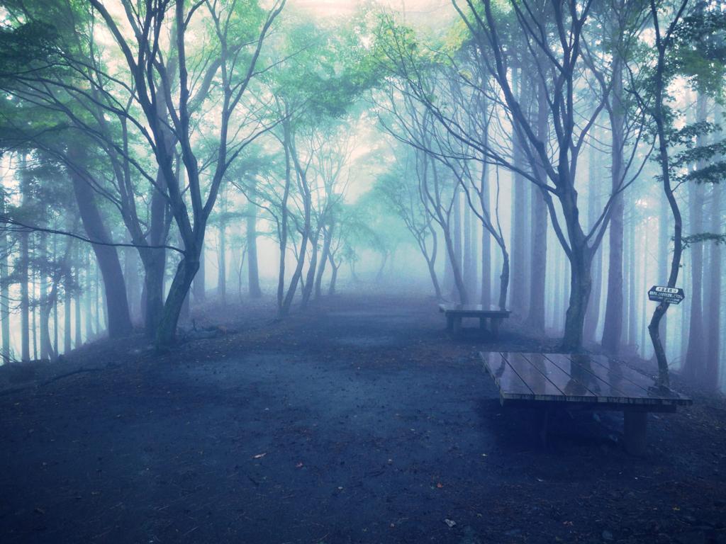 霧の中の視野