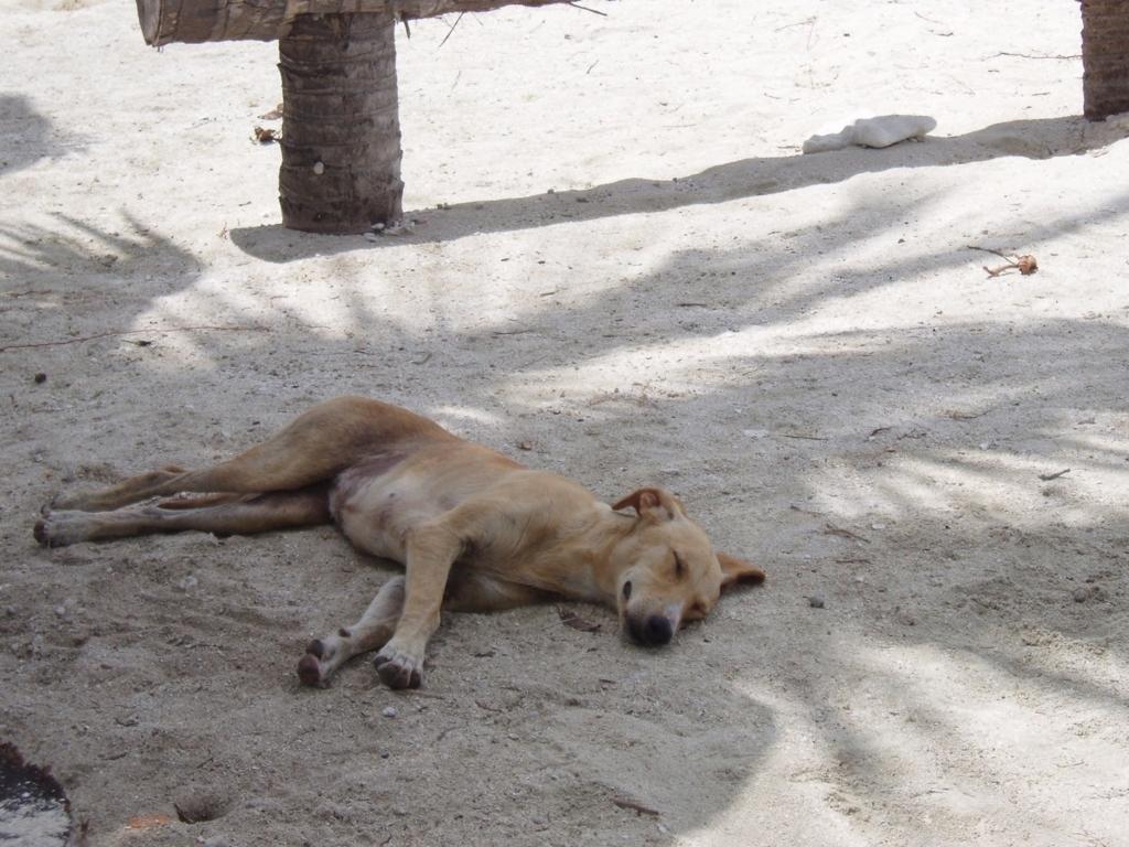 犬がのんびりと寝ている