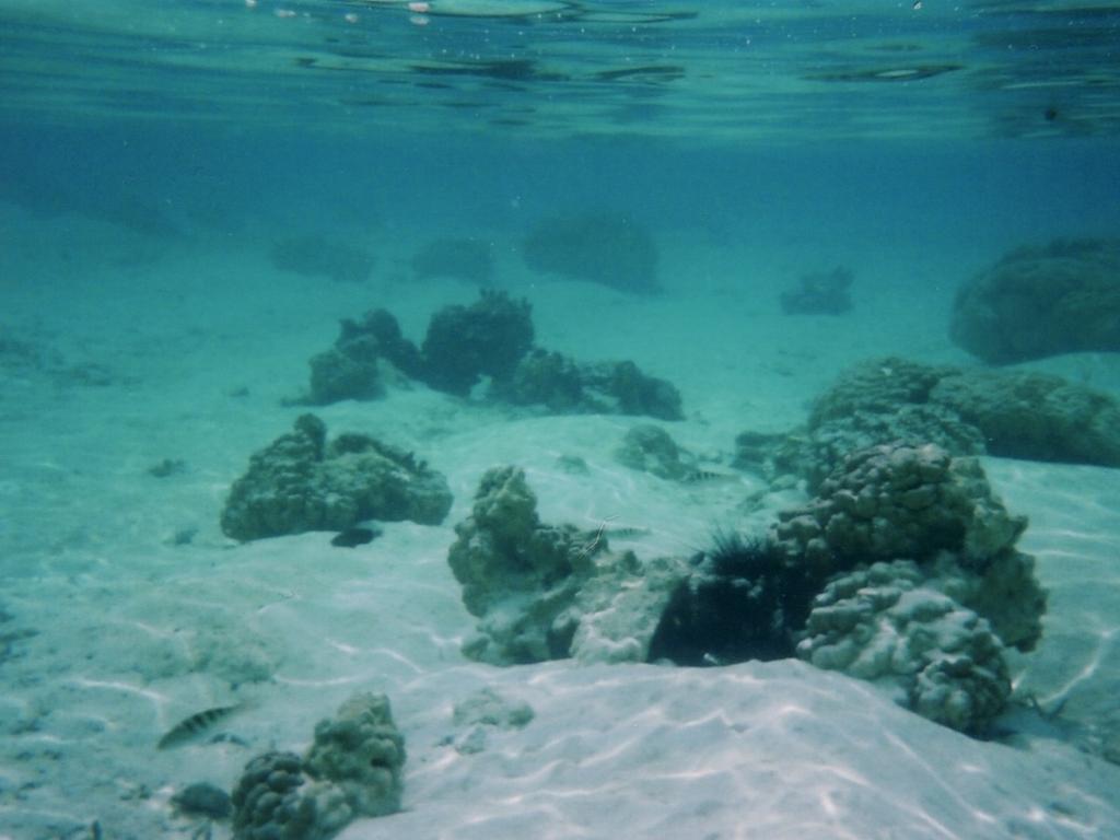 海に潜っても遠くまで見通せる