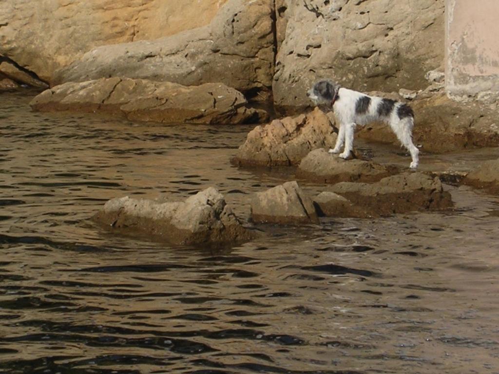海で水浴びをしたあと、岩場に佇む犬