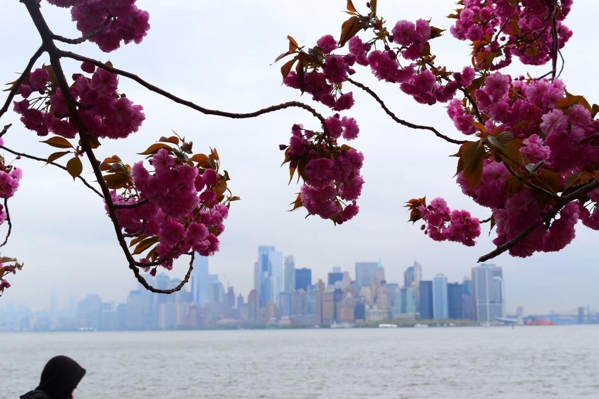 桜のバックに写るマンハッタン