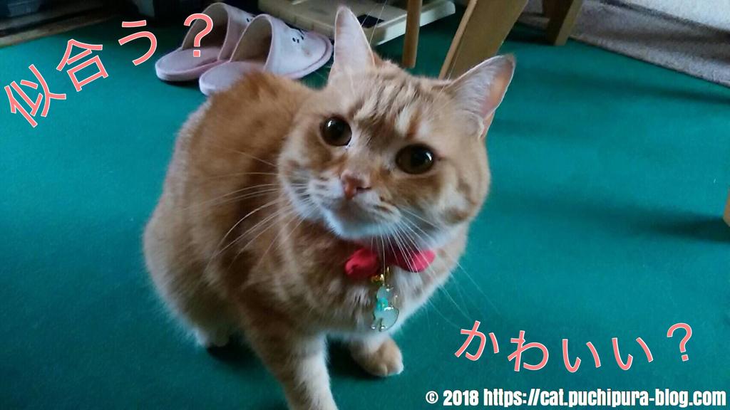 f:id:hitsuji-puchi:20181216085416j:plain