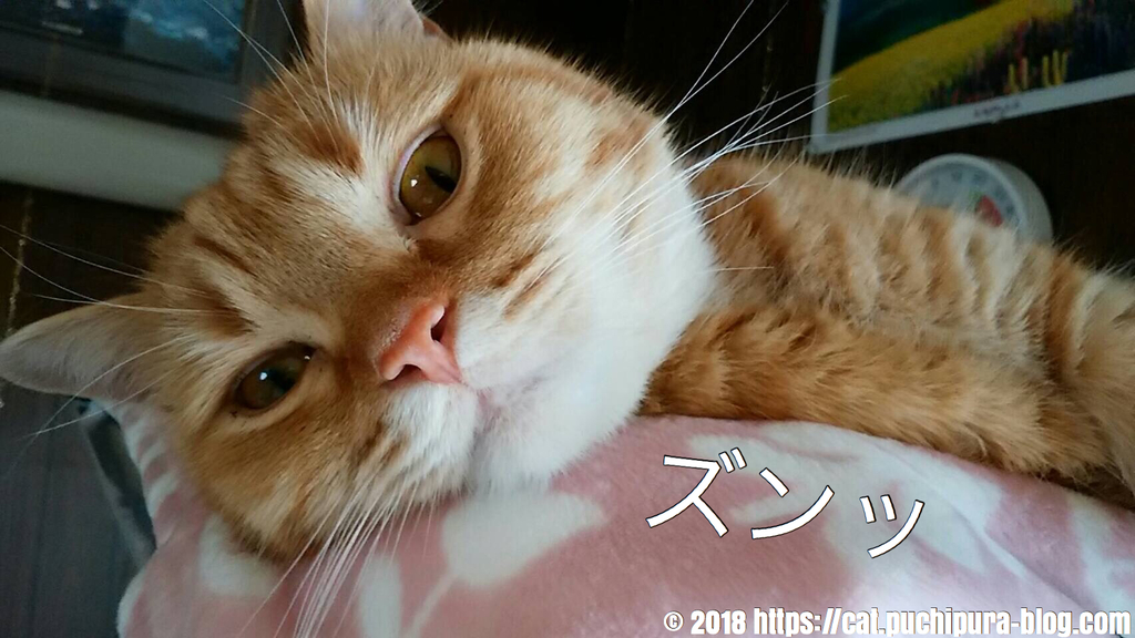f:id:hitsuji-puchi:20181218060252j:plain