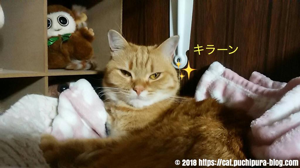 f:id:hitsuji-puchi:20181218060348j:plain