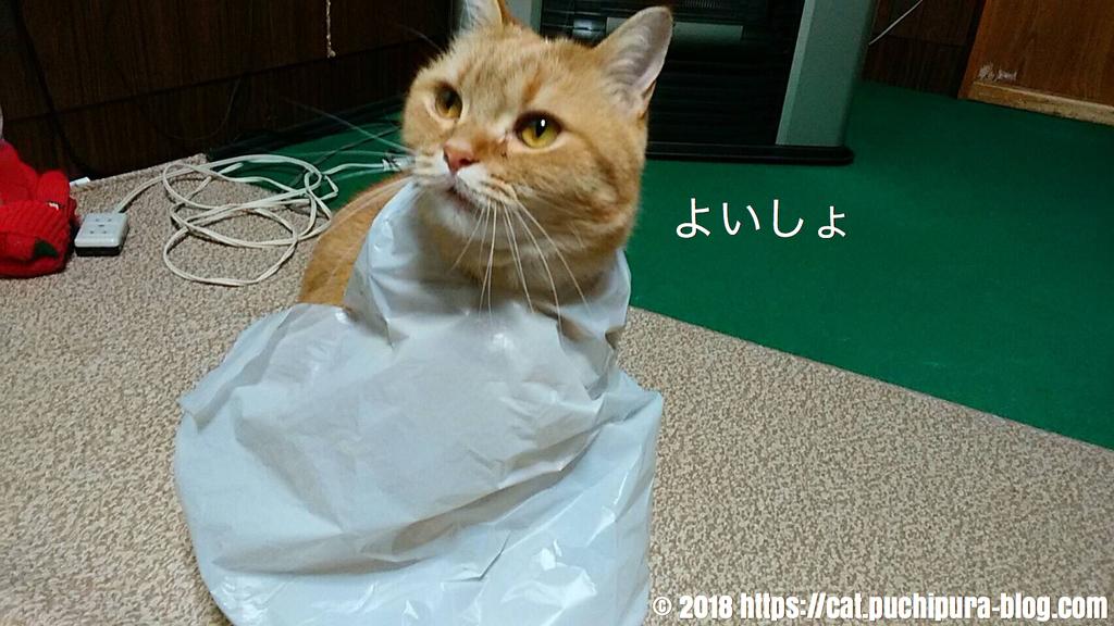 f:id:hitsuji-puchi:20181218060706j:plain
