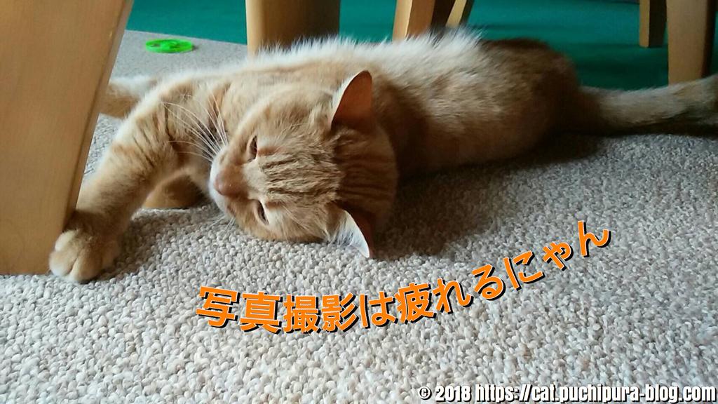 f:id:hitsuji-puchi:20181219095114j:plain