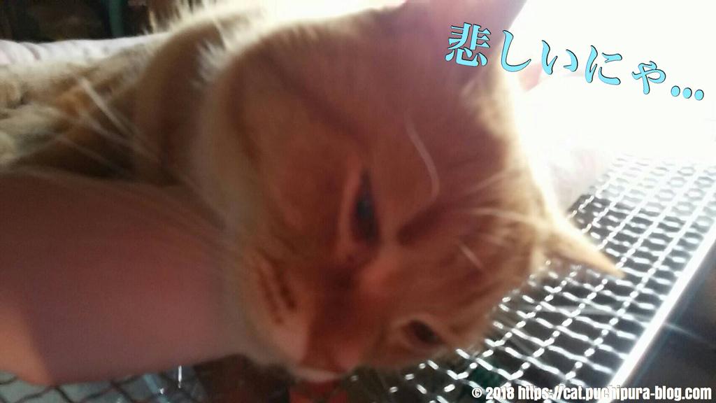 f:id:hitsuji-puchi:20181220073655j:plain
