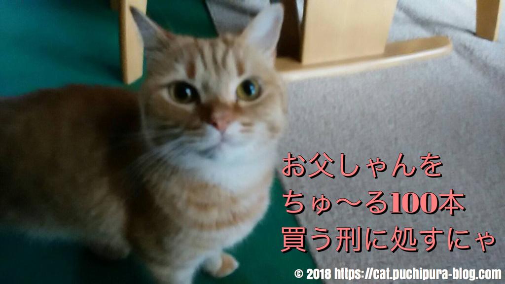 f:id:hitsuji-puchi:20181220073857j:plain