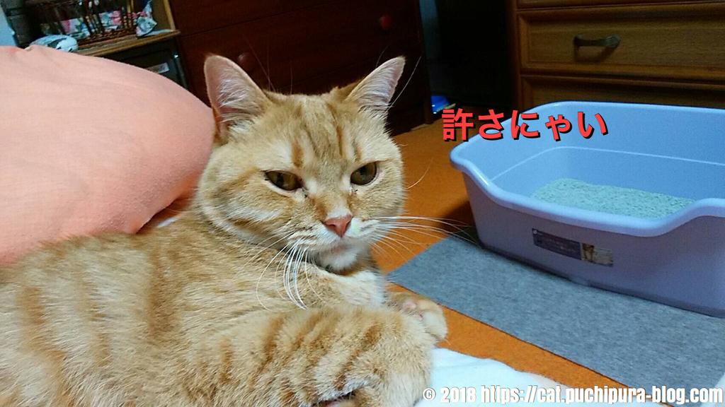 f:id:hitsuji-puchi:20181220074941j:plain